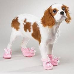 Cute dog in funny pink slippers.jpg