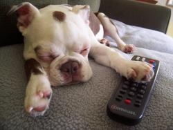 Funny pic of a sleepy dog paw on remote.jpg