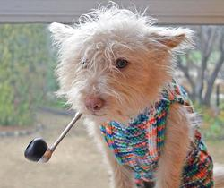 A dog in a sweater and pipe.jpg