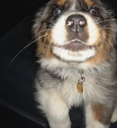 a dog looking very close to the camera and makes a funny face expression.jpg