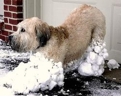Funny picture of a dog with snow on its legs.jpg