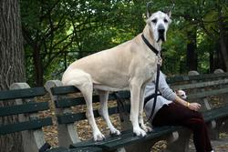 Funny picture of a big dog sitting on a park bench.jpg