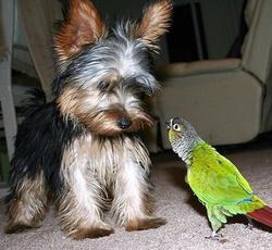Funny picture of a dog being yelled at by a Parakeet.jpg