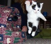 Humorous picture of a flying kitten with one paw out.jpg