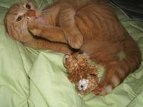 Orange cat licks her hind paw.jpg