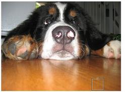 funny dog face picture.jpg