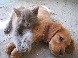 A Puppy and a cat lay on the ground together.jpg