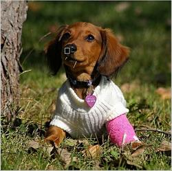 funny picture of a dog with its cute outfit.jpg