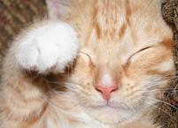 A funny and cute picture of a kitten rubbing her eye with a white little paw.jpg