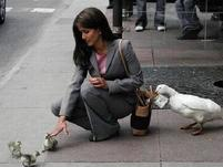 Funny photo of a duck stealing money from a woman.jpg