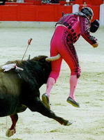 Funny or not so funny picture of a bull burying its horn into a matador's groin.jpg