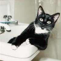 Cat in the sink looks surprised.jpg