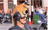 funny cat picture with its owner and motorbicycle.jpg