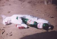 White drunk and smoke cat picture.jpg
