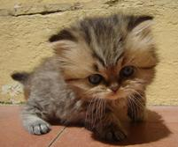 Funny and cute photo of a cute kitten with big head.jpg
