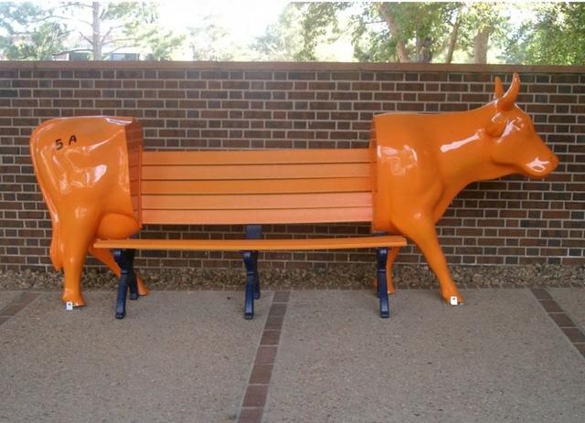 cow bench picture.jpg