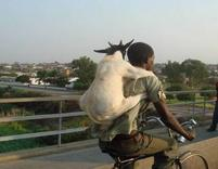 humorous picture of a goat on a man's back.jpg