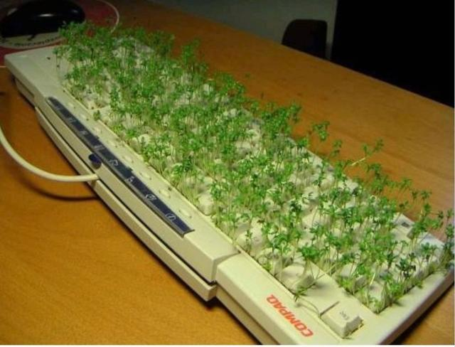 sprout growing on the key board picture.jpg