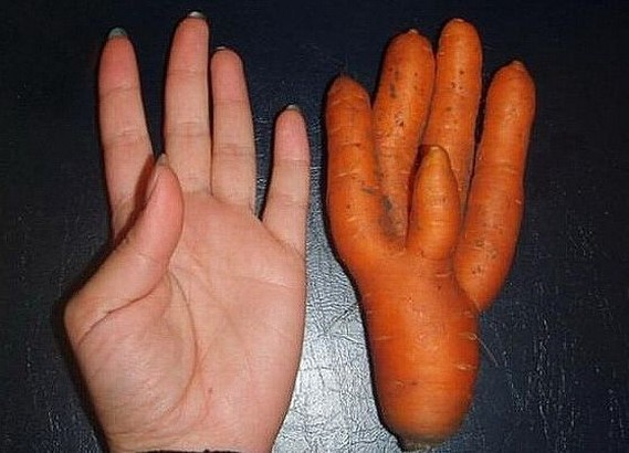 carrot hand picture.jpg