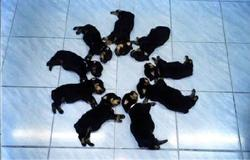 Circle o puppies_so cute.jpg