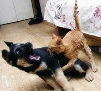 cat biting a puppy.JPG