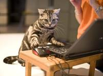 funny image of a kitten using the computer.jpg
