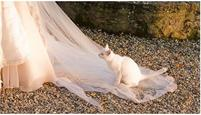 Funny wedding photo with a white kitten is doing its business on the veil.JPG
