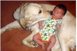 Picture of a big dog clicking baby with funny scary face expression.JPG