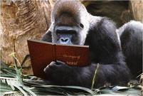 Funny pic of a gorilla reading a book.jpg