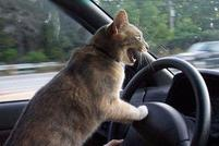 Cat on the wheels of a car.jpg