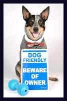 Funny sign that says Dog Friendly but Beware of Owner.jpg