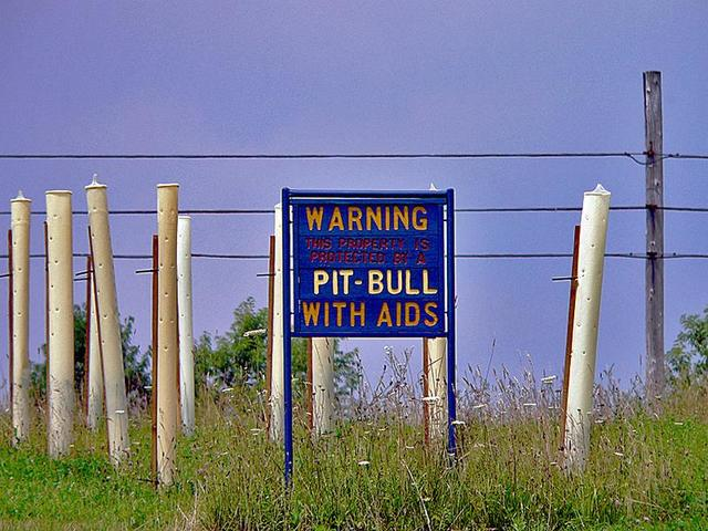 Pitbull with AIDS warning sign.jpg
