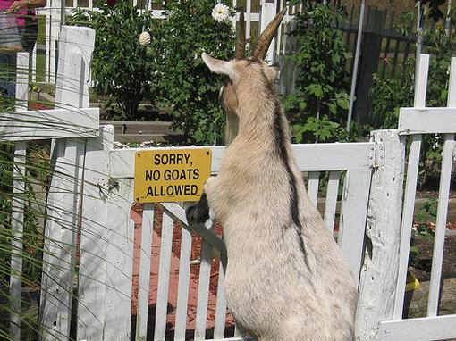 Sorry no goats are allowed.jpg