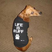 Little dog in Life is Ruff funny shirt.jpg