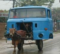 Cow carriage with truck top .JPG